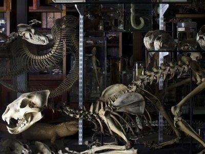 Grant Museum skeleton