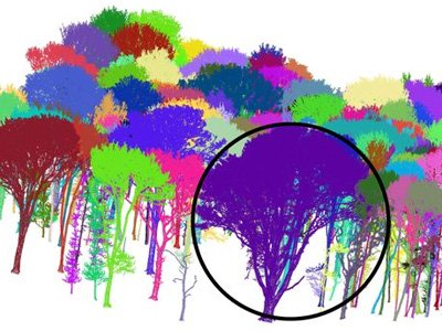 Wytham Woods terrestrial laser scanner data