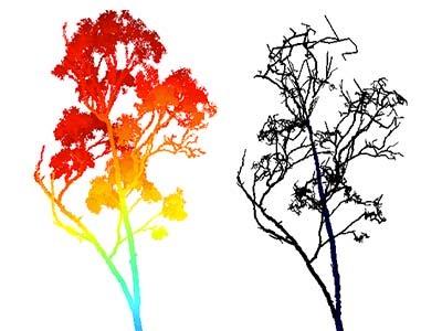 Tree scanning