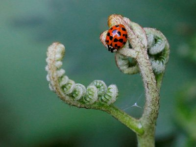 ladybird_alien