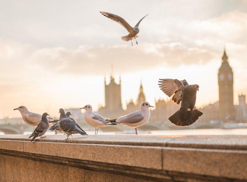 London wildlife